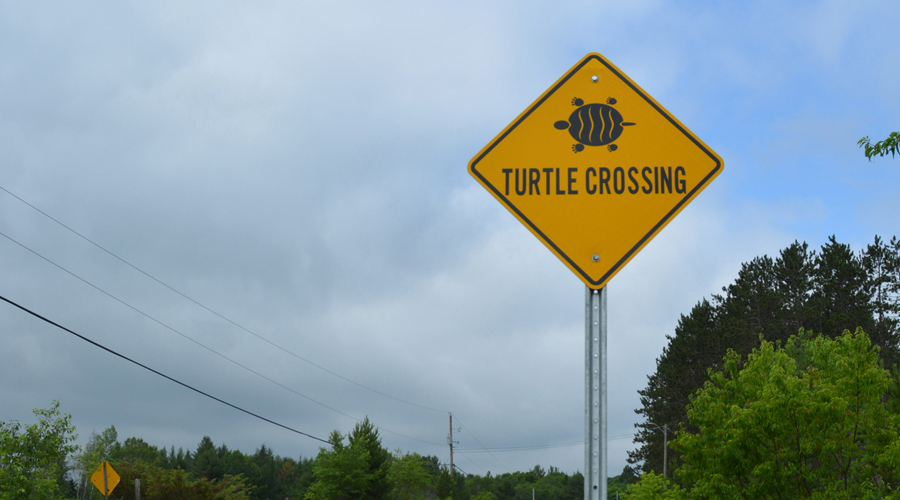 Protecting the Blanding's Turtle
